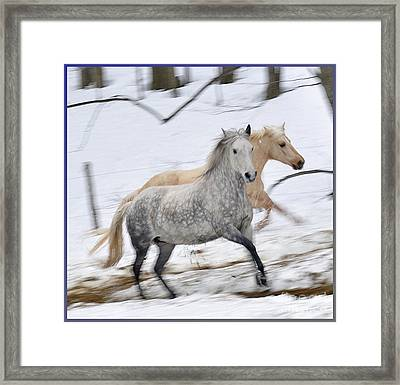 Paso Fino Mares Take Flight Framed Print by Patricia Keller