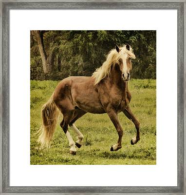 Paso Peruvian Beauty Framed Print by Priscilla Burgers
