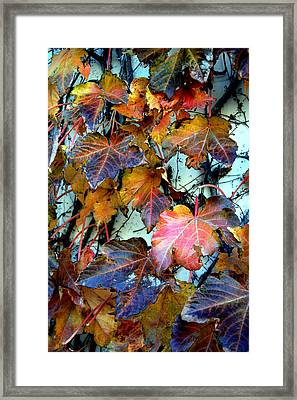 Passage Of Time Framed Print