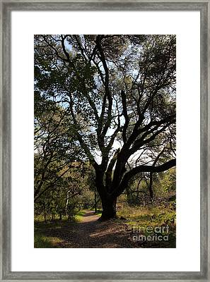 Passage Through The Tree Of Knowledge 5d21976 Framed Print by Wingsdomain Art and Photography