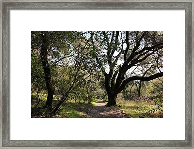 Passage Through The Tree Of Knowledge 5d21977 Framed Print by Wingsdomain Art and Photography