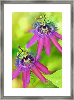 Passiflora Piresii Vine  - Passiflora Twins Framed Print by Michelle Wiarda