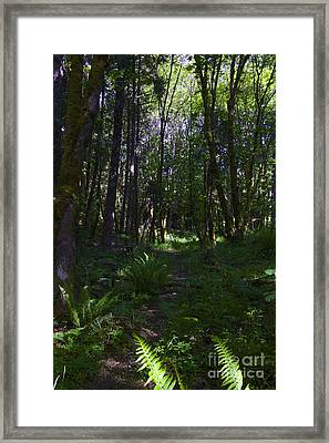 Passing Ferns  Framed Print by Tim Rice