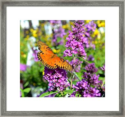 Passion Butterfly Framed Print by Deena Stoddard