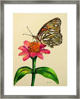 Passion Butterfly On Zinnia Framed Print
