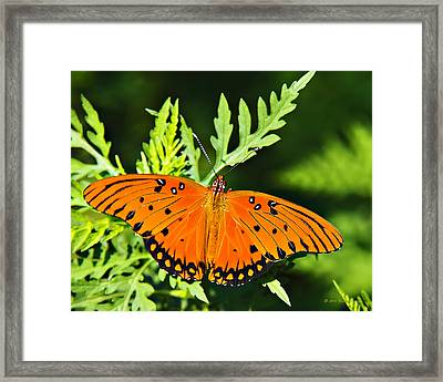 Passion Butterfly Framed Print
