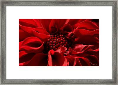Passion Framed Print by Connie Handscomb