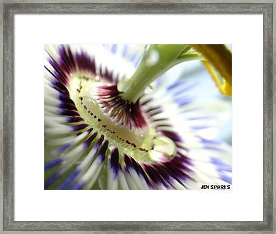 Passion Dew Framed Print by Jen Sparks