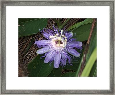 Passion Flower I Framed Print
