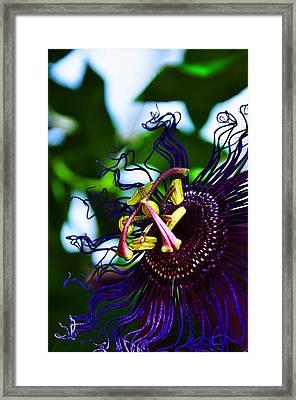 Passion Flower II Framed Print