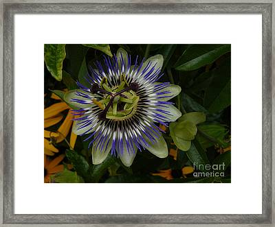Framed Print featuring the photograph Passion Flower by Jane Ford