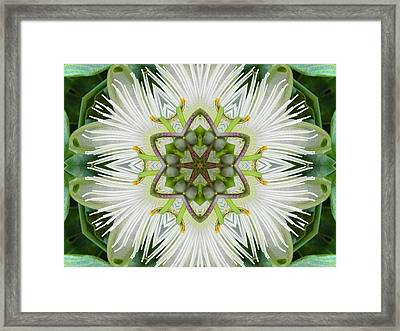Passion Flower Mandala Framed Print