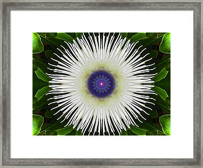 Passion Flower Portal Mandala Framed Print