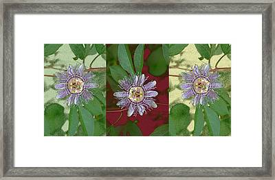 Passion Flower Triptych Framed Print
