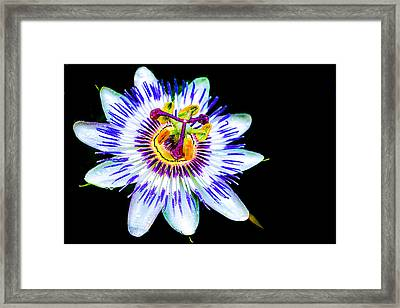 Passion Flower Vine Framed Print by Keith Homan