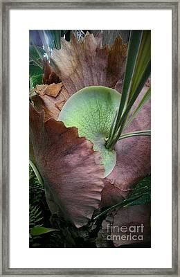 Passion For Life Begins Framed Print