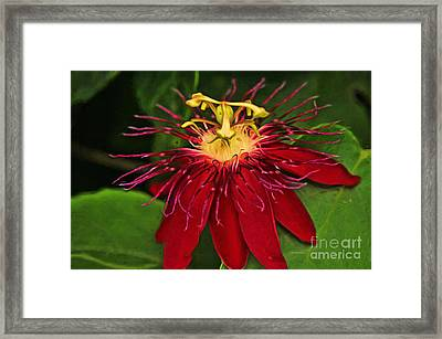 Passion In Red Framed Print by Deborah Benoit