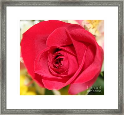 Framed Print featuring the photograph Passion by Judy Palkimas
