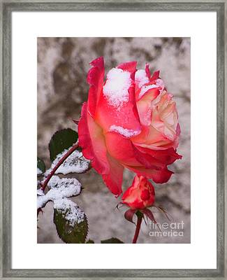 Framed Print featuring the photograph Passion Of Life by Agnieszka Ledwon