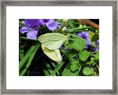 Passion Of The Butterflies Framed Print