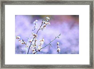 Passion On A Stick Framed Print