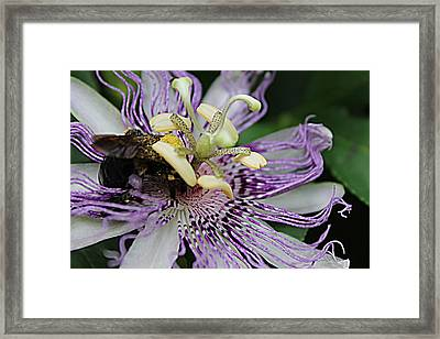Passion Sweetness Framed Print by Sarah E Kohara