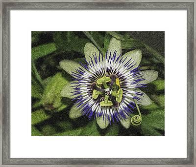 Passionate Beauty Framed Print by Karen Stephenson