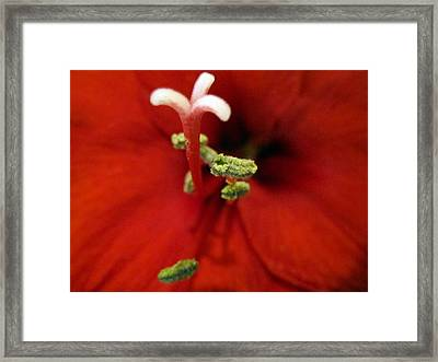 Passionate Framed Print by Mike Podhorzer