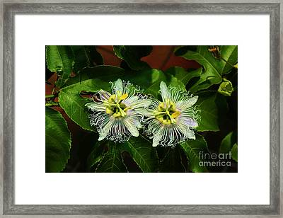 Passionate Pair Framed Print by Craig Wood