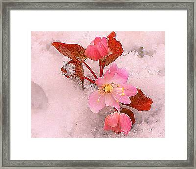 Framed Print featuring the photograph Passionate Pink by Candice Trimble