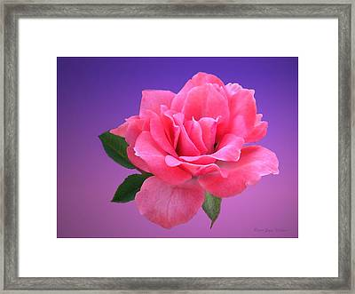 Framed Print featuring the photograph Passionate Pink by Joyce Dickens