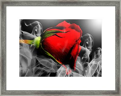 Passionate Red Hot Smoky Rose Framed Print by Georgiana Romanovna