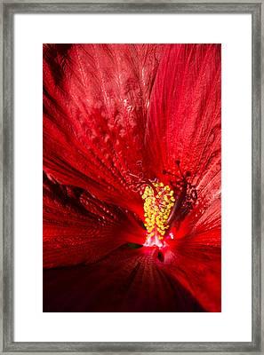 Passionate Ruby Red Silk Framed Print by Georgia Mizuleva
