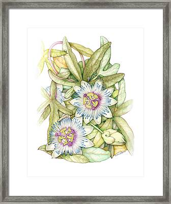 Passionflower Framed Print by Elizabeth Martin