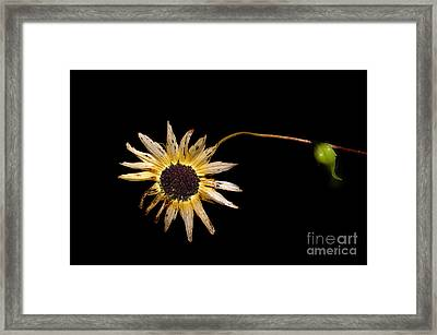 Past Prime Framed Print by The Stone Age