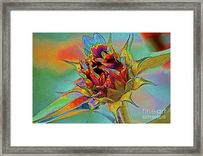 Past Summers Framed Print by Gwyn Newcombe