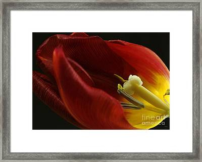 Past The Sell By Date Framed Print by Wobblymol Davis