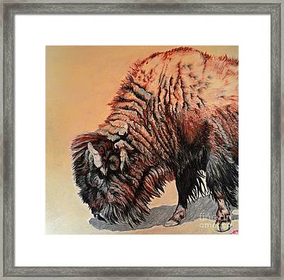 Pastel Buffalo Framed Print by Ann Marie Chaffin
