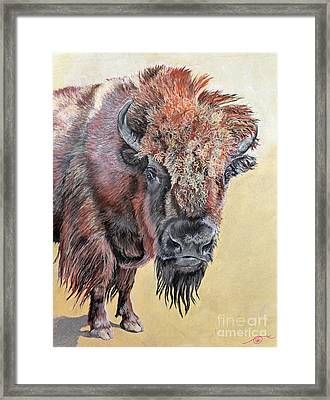 Pastel Buffalo Stare Framed Print by Ann Marie Chaffin