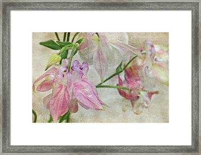 Framed Print featuring the photograph Pastel Columbines by Peggy Collins