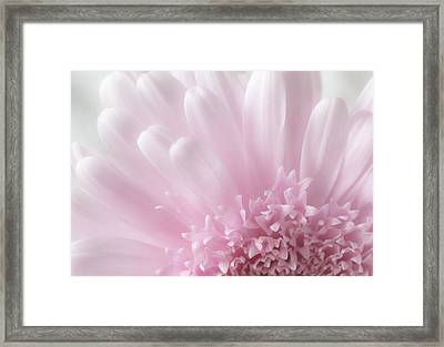Pastel Daisy Framed Print by Dale Kincaid