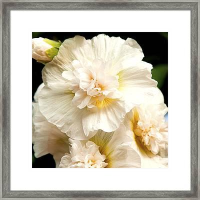 Pastel Delphinium Framed Print
