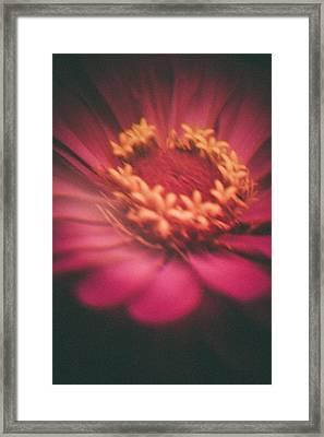 Pastel Dream  Framed Print