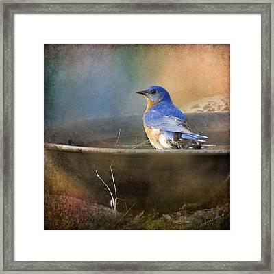 Pastel Eastern Bluebird Framed Print