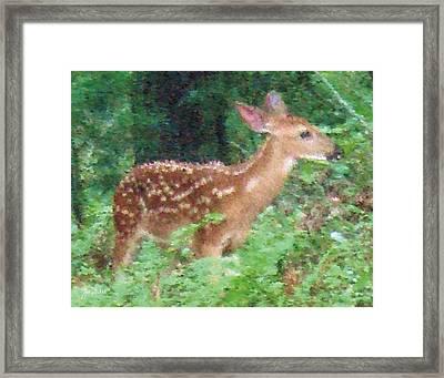 Pastel Fawn 3 Framed Print