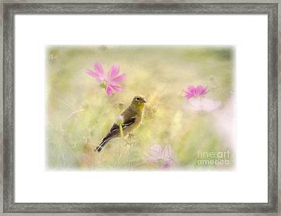 Pastel Finch In Oil Framed Print by Cris Hayes