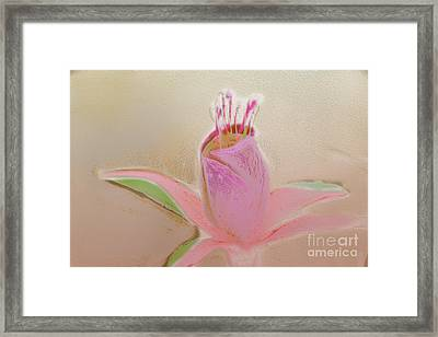 Pastel Flower Framed Print by Terry Weaver
