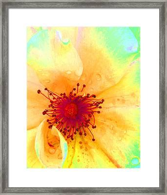 Pastel Garden Framed Print by Charlotte Schafer