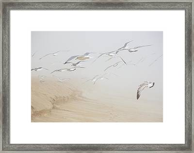 Pastel Gulls In Fog Framed Print