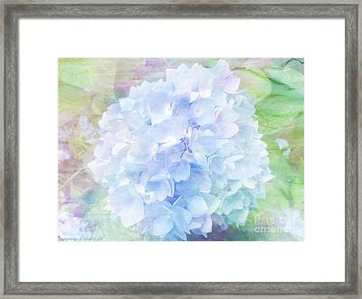 Pastel Hyacinth Framed Print